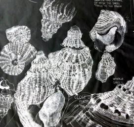 Shells (1996)